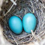 Family Planning & Fertility